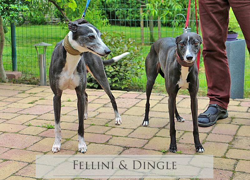 Fellini &                         Dingle