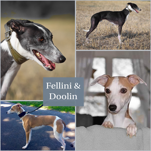 Fellini &                           Doolin