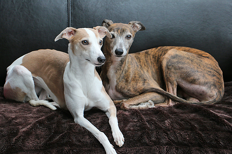 Dotty & Silas
