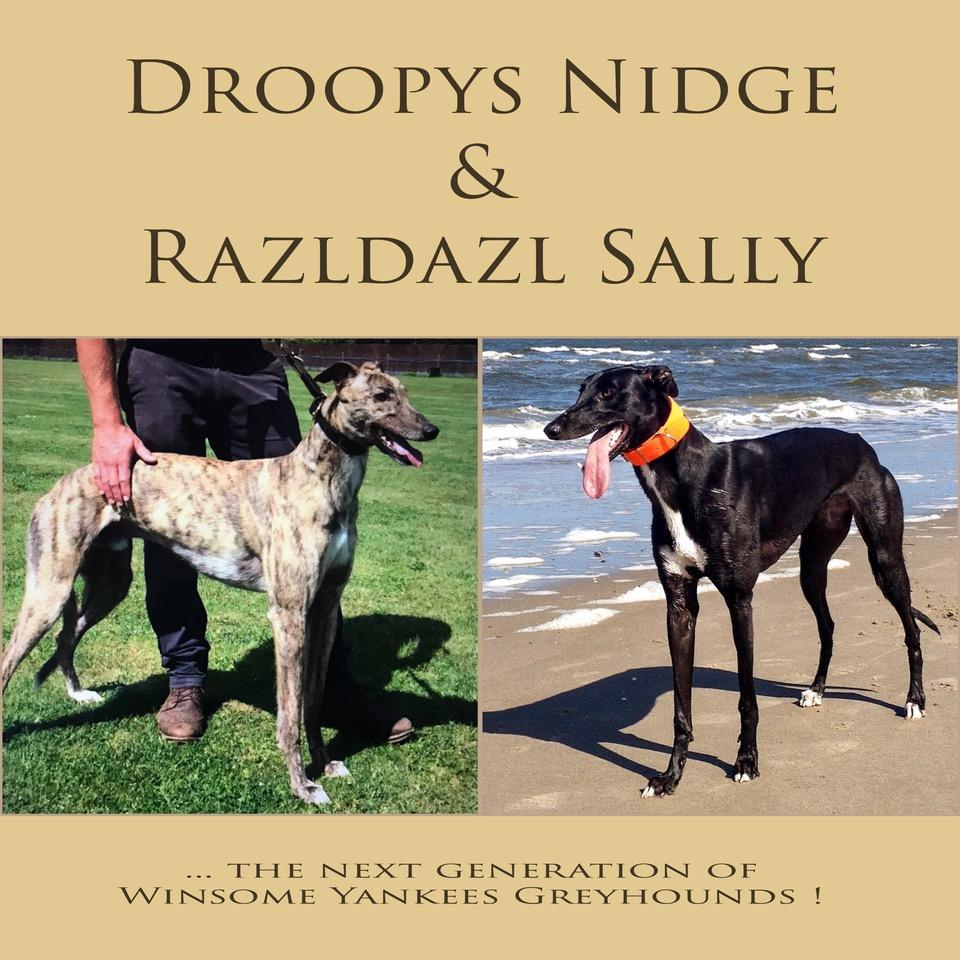 Nidge                         & Sally