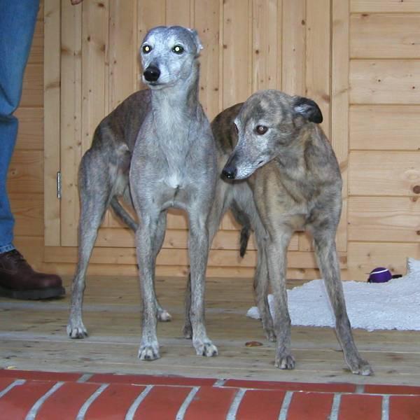 Speedy & Leroy 2002